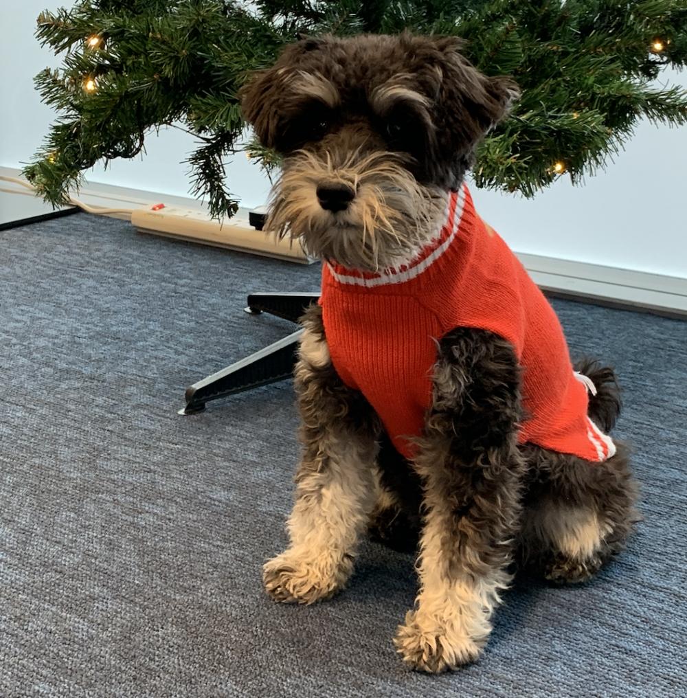 Coco At Christmas